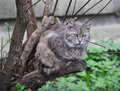 Cat on the tree gray climbed and rest Royalty Free Stock Image