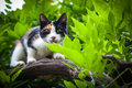 Cat in tree hunting domestic looking for prey Royalty Free Stock Photos