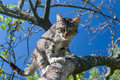 Cat on the tree over branch in garden blue sky background Royalty Free Stock Images