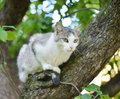 Cat on a tree sitting Stock Photos