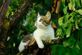 Cat in a tree in summer small on branch hunting for birds Royalty Free Stock Photography