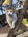 Cat on tree white striped domestic climbed autumn and getting ready to jump Royalty Free Stock Photos