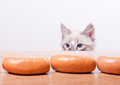 Cat tries to steal a sausage from the table Stock Photos