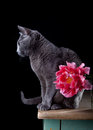 Cat and Tulip Stock Image