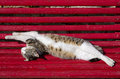 Cat twisted, stretching and sleeping Stock Photos