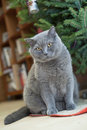 Cat under new year tree Royalty Free Stock Image