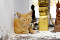 A cat vagabond live in the buddhist temple Stock Photo