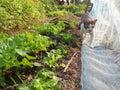 stock image of  Cat walk in the vegetable garden