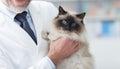 Cat at the veterinary clinic Royalty Free Stock Photo