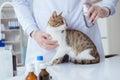Cat visiting vet for regular checkup Royalty Free Stock Photo