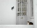 Cat waiting in front of the home door Stock Photo