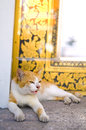 Cat wake up in thai temple Royalty Free Stock Photography