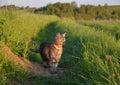 Cat on the walk