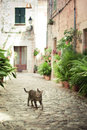Cat walking down the street in valldemossa majorca balearic islands spain Stock Image