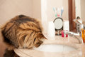 Cat on the washbasin sitting watching water from faucet Stock Images