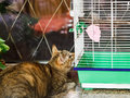 Cat watching bird in cage Royalty Free Stock Photo