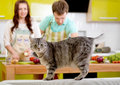Cat watching to the camera with married couple on the background at kitchen Royalty Free Stock Photo