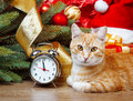 Cat wating for christmas time red waiting Royalty Free Stock Photo