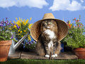 Cat Wearing Gardening Hat Royalty Free Stock Photo