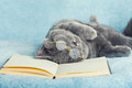 Cat wearing glasses lying on a book Royalty Free Stock Photo
