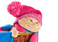 Cat wearing a hat and a scarf Royalty Free Stock Photo