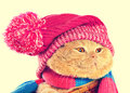 Cat wearing a hat and a scarf. Royalty Free Stock Photo