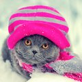 Cat wearing knitting hat and scarf