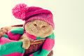 Cat wearing a knitting hat and scarf Royalty Free Stock Photo