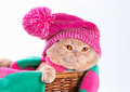 Cat wearing pink knitting hat Royalty Free Stock Photo