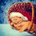 Cat wearing santa hat sleeping in a basket Royalty Free Stock Image