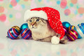 Cat wearing Santas hat Royalty Free Stock Photo