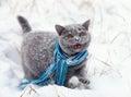 Cat Wearing Scarf Walking On T...