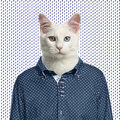 Cat wearing a spotted shirt spotted background isolated on white Royalty Free Stock Images
