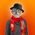 Cat wearing sweater scarf and shirt colored background Royalty Free Stock Photos