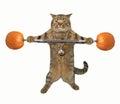 Cat weightlifter 5