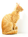 Cat  on white Royalty Free Stock Photo