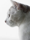 Cat on white background the side view of a domestic isolated a Stock Photo