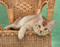 Cat on wicker chair Stock Image