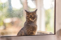 Cat at the window an adorable looking inside from a dirty Royalty Free Stock Photography