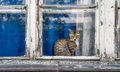 Cat on the window domestic shorthair sitting at old with rotting wood and peeling paint Royalty Free Stock Photo