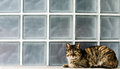 Cat on window sill outdoor Stock Photography