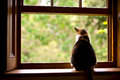 Cat in a window sitting on sill Stock Image