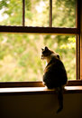 Cat in a window sitting on sill Royalty Free Stock Photography