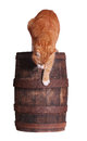 Cat and wooden barrel on white Stock Photo