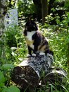 Cat in the woods a beautiful young and inquisitive sitting on logs Royalty Free Stock Photos