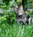Cat in a Yard Stock Images