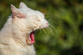 Cat yawning in outdoor Royalty Free Stock Photography