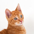 Cat young cute with red fur and big eyes Stock Photo