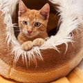 Cat young cute with red fur in its sleeping place Stock Photo