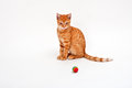 Cat young cute with red fur and a playing ball Stock Photography